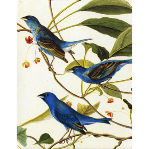 Audubon Birds Notecards