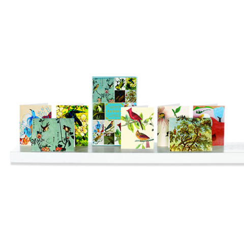 Birds BB notecard box