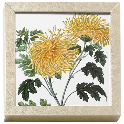 Horticultural Society: Yellow Chrysanthemum art block