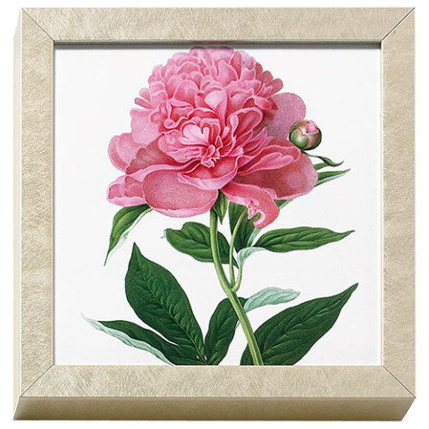 Horticultural Society: Peonie art block