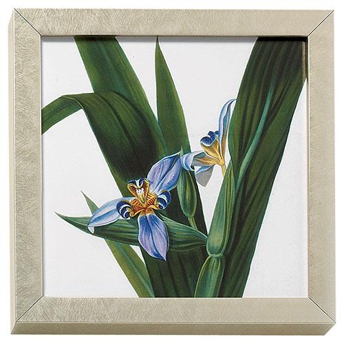 Horticultural Society: Iris art block