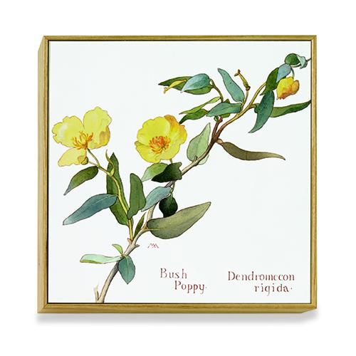 American Botanicals: Wild Sweet Pea art block