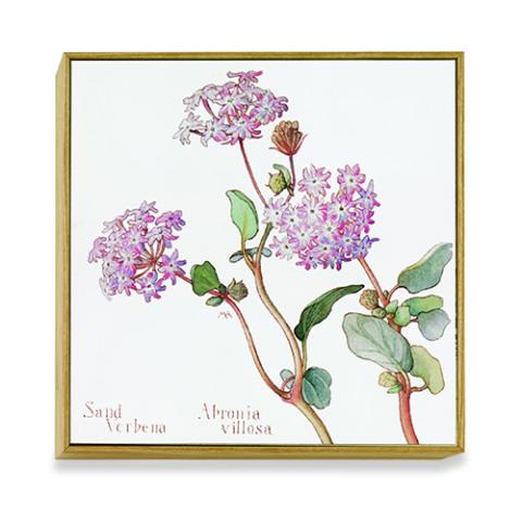 American Botanicals: Penstemon cyananthus art block